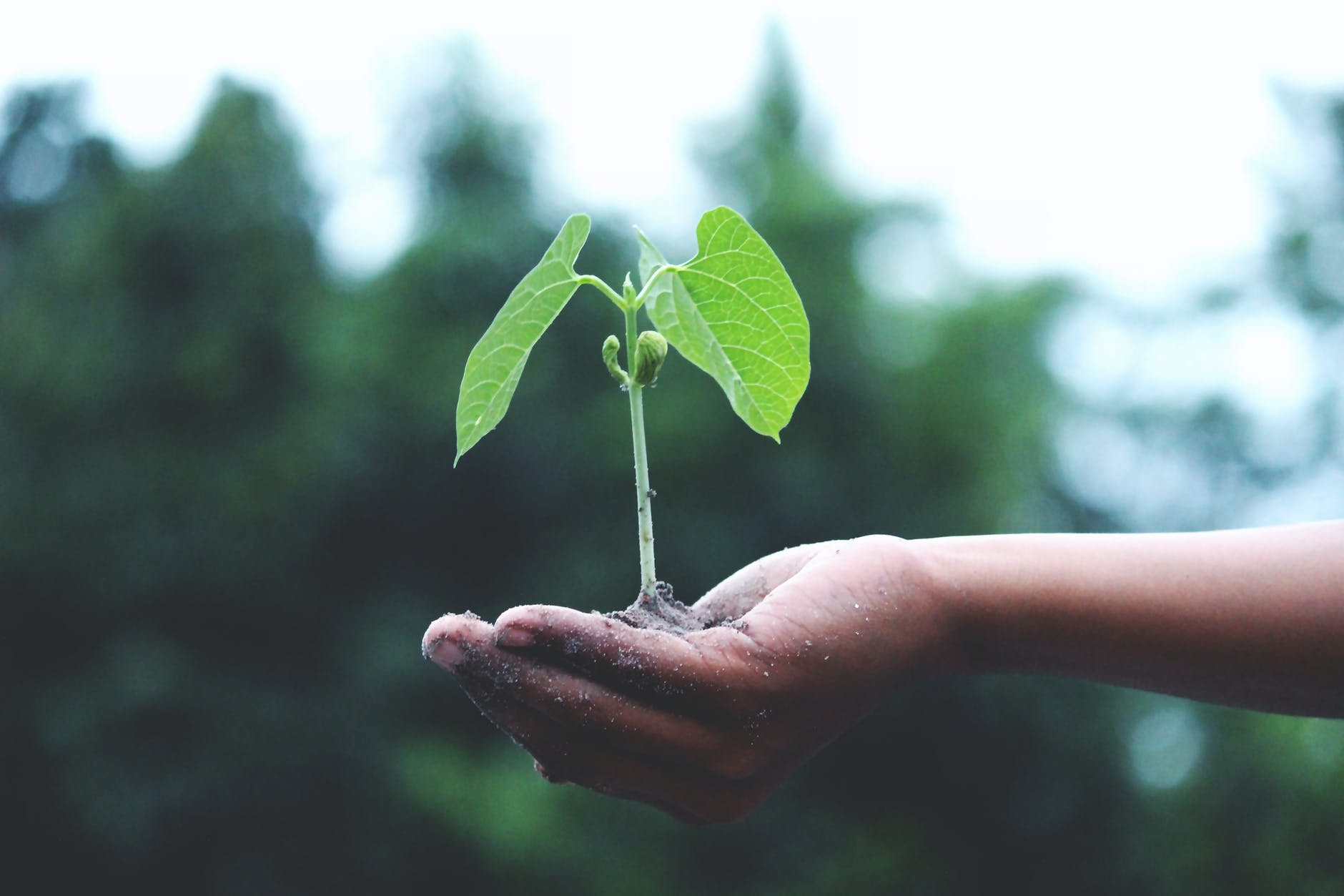 person holding a green plant